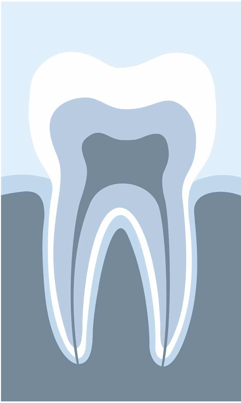 tooth parts diagram